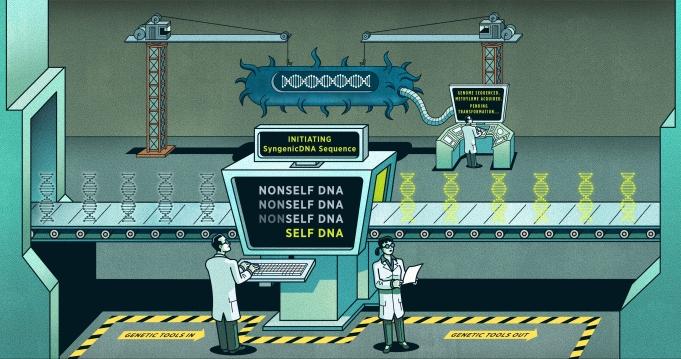 SyngenicDNA